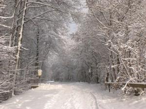 Winter in Kleinkahl Jan 2010 (29)