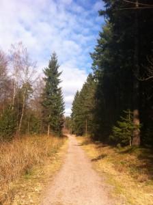 Wanderung in Wiesen (1)